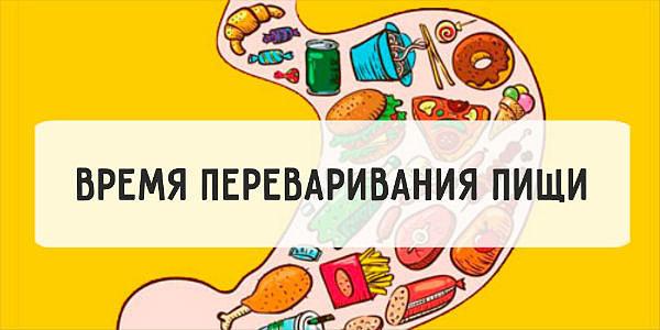 Сколько перевариваются различные продукты (Теперь понятно, что лучше съесть перед сном)